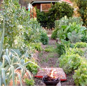 HomaFarming-garden